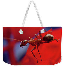 Weekender Tote Bag featuring the photograph Red Ant Macro by Jeff Folger