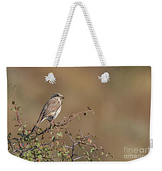 Red-backed Shrike Juv. - Lanius Collurio Weekender Tote Bag by Jivko Nakev