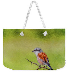 Red-backed Shrike Weekender Tote Bag