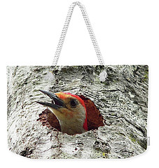 Red-bellied Woodpecker 02 Weekender Tote Bag by Al Powell Photography USA