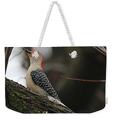 Red-bellied Woodpecker Weekender Tote Bag by Living Color Photography Lorraine Lynch