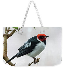 Red Capped Cardinal 2 Weekender Tote Bag