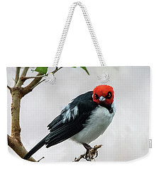 Red Capped Cardinal Weekender Tote Bag