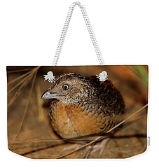 Red-chested Button-quail Weekender Tote Bag