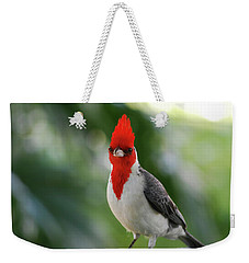 Red Crested Cardinal Bird Standing On A Railing Weekender Tote Bag
