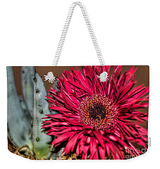 Weekender Tote Bag featuring the photograph Red Daisy And The Cactus by Diana Mary Sharpton