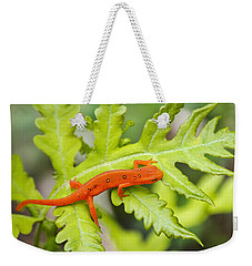 Red Eft Eastern Newt Weekender Tote Bag by Christina Rollo