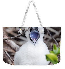 Red Footed Booby Chick Weekender Tote Bag by Jess Kraft