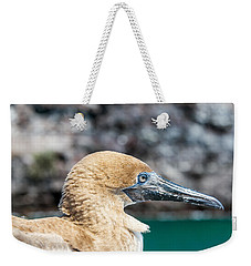 Red Footed Booby Juvenile Weekender Tote Bag by Jess Kraft
