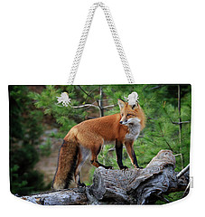 Red Fox 4 Weekender Tote Bag