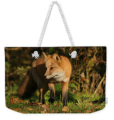 Weekender Tote Bag featuring the photograph Red Fox by Doris Potter