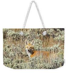 Red Fox In Sage Brush Weekender Tote Bag