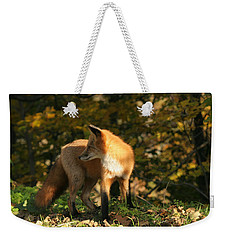 Weekender Tote Bag featuring the photograph Red Fox In Shadows by Doris Potter