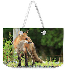 Red Fox In The Rain Weekender Tote Bag
