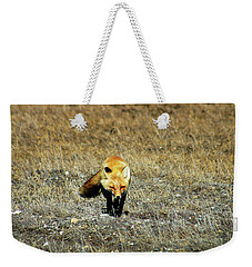Weekender Tote Bag featuring the photograph Red Fox On The Tundra by Anthony Jones