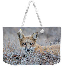 Red Fox - San Juan Islands Weekender Tote Bag