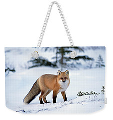 Weekender Tote Bag featuring the photograph Red Fox Vulpes Vulpes Portrait by Konrad Wothe