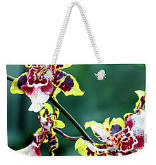 Weekender Tote Bag featuring the photograph Striped Maroon And Yellow Orchid by Melinda Blackman