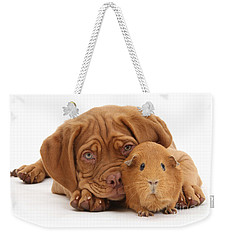 Red Guinea Pig And Dogue De Bordeaux Weekender Tote Bag