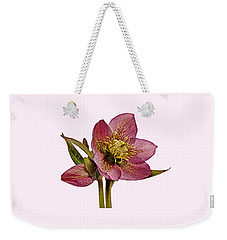 Weekender Tote Bag featuring the photograph Red Hellebore Transparent Background by Paul Gulliver