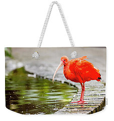 Weekender Tote Bag featuring the photograph Red Ibis by Alexey Stiop