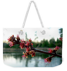 Weekender Tote Bag featuring the photograph Red Maple Buds At Dawn by Kent Lorentzen