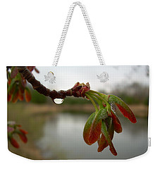 Red Maple Seed Pods At Dawn Weekender Tote Bag by Kent Lorentzen