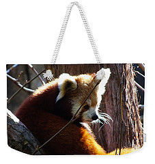Weekender Tote Bag featuring the photograph Red Panda by Angela DeFrias