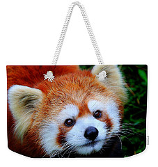 Red Panda Weekender Tote Bag by Davandra Cribbie
