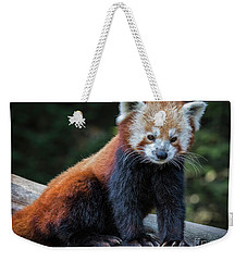 Red Panda  Weekender Tote Bag by Mitch Shindelbower
