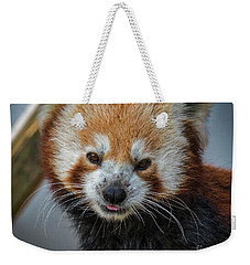 Red Panda Portrait Weekender Tote Bag by Mitch Shindelbower