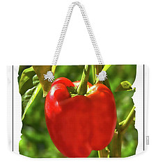 Red Pepper On The Vine Weekender Tote Bag