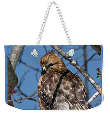 Weekender Tote Bag featuring the photograph Red Shouldered Hawk 2017 by Bill Wakeley