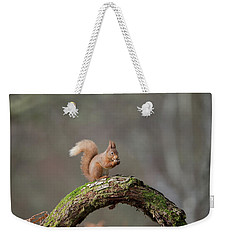 Red Squirrel Eating A Hazelnut Weekender Tote Bag