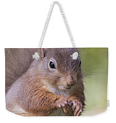 Red Squirrel - Scottish Highlands #1 Weekender Tote Bag