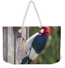 Weekender Tote Bag featuring the photograph Red-headed Woodpecker 2018  by Ricky L Jones