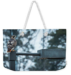 Weekender Tote Bag featuring the photograph Red Tailed Hawk At Parkside by Ricky L Jones