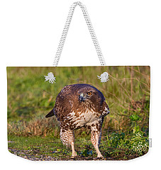 Red-tailed Hawk Hunting Bugs Weekender Tote Bag