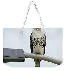 Weekender Tote Bag featuring the photograph Red-tailed Hawk Looking At Me by Ricky L Jones