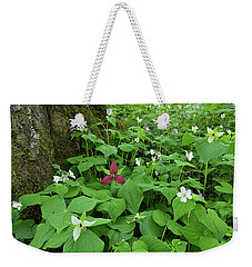 Red Trillium At Center Weekender Tote Bag by Alan Lenk