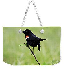 Red Winged Blackbird Weekender Tote Bag by Alyce Taylor