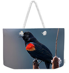 Red-winged Blackbird Singing Weekender Tote Bag