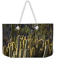 Weekender Tote Bag featuring the photograph Reflecting The Sunshine by Phyllis Denton