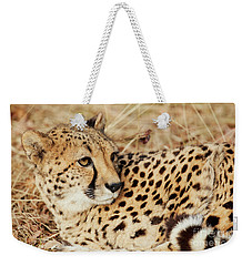 Weekender Tote Bag featuring the photograph Resting Cheetah, Close-up  by Nick Biemans