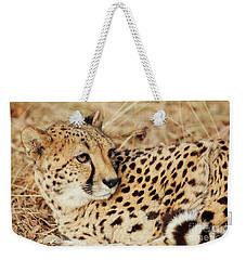 Resting Cheetah, Close-up  Weekender Tote Bag by Nick Biemans