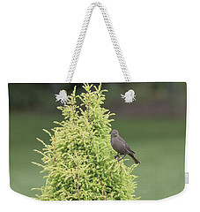 Weekender Tote Bag featuring the photograph Resting In The Trees by Kim Hojnacki