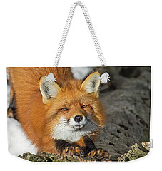 Weekender Tote Bag featuring the photograph Reynard The Fox by Nina Stavlund