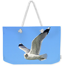Ring Billed Gull 2 Weekender Tote Bag