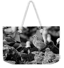 Ring-billed Gulls 2016-1 Weekender Tote Bag by Thomas Young