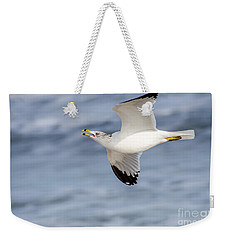 Ring-billed Seagull Looking For Attention Weekender Tote Bag by Debra Martz